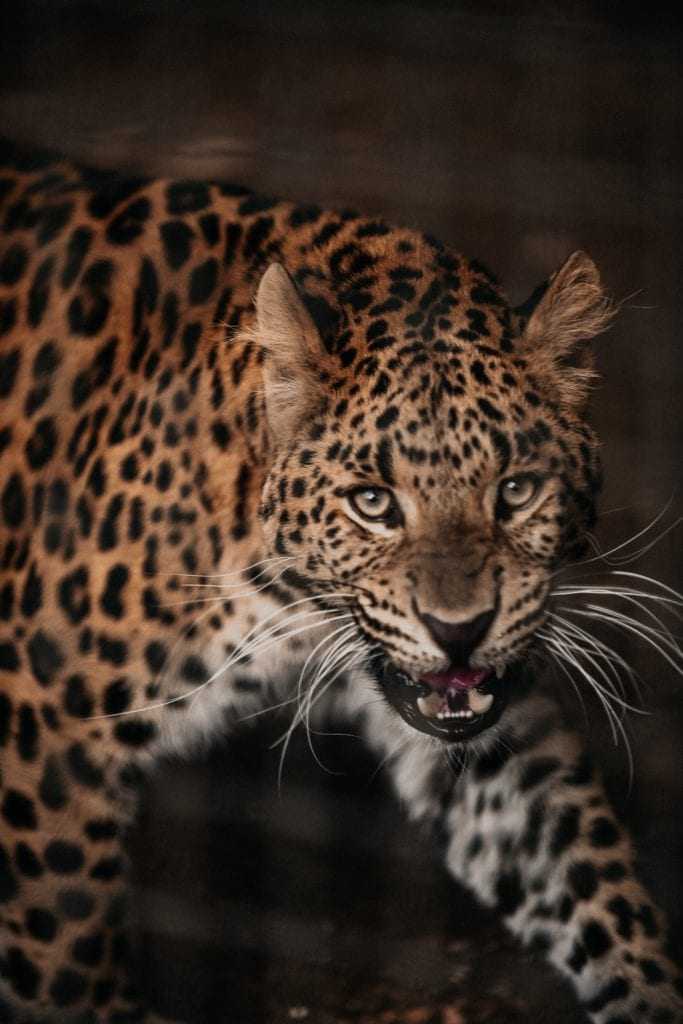 Leopard-5 Facts You Didn't Know About It