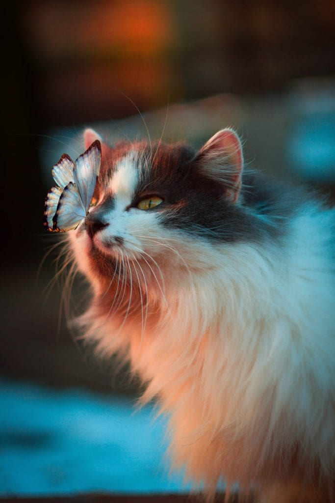 5 Mythical Cats Around The World