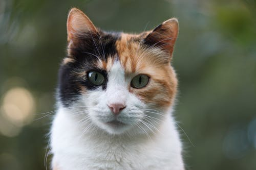 Do You Know The Wonderful Exotic Cats?