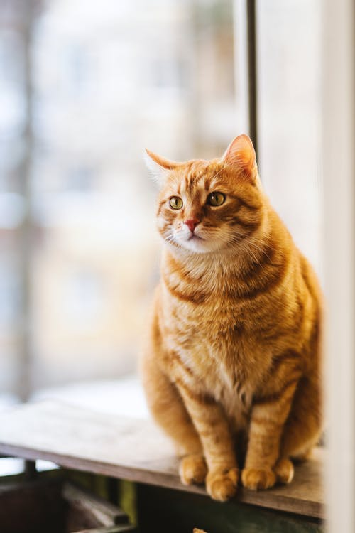 12 Things You Should Know About Cat