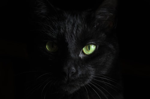 5 Reasons To Adopt A Black Cat
