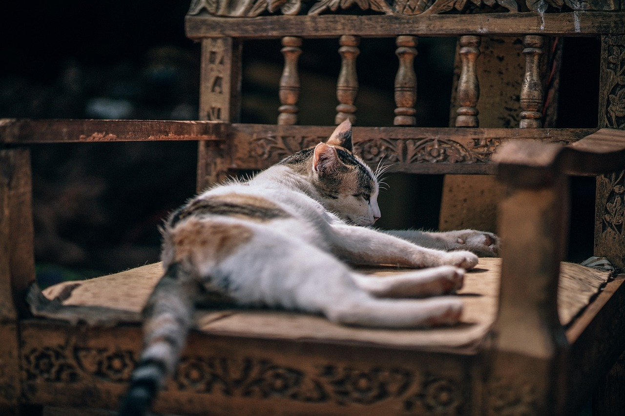 A cat lying on top of a wooden chair
