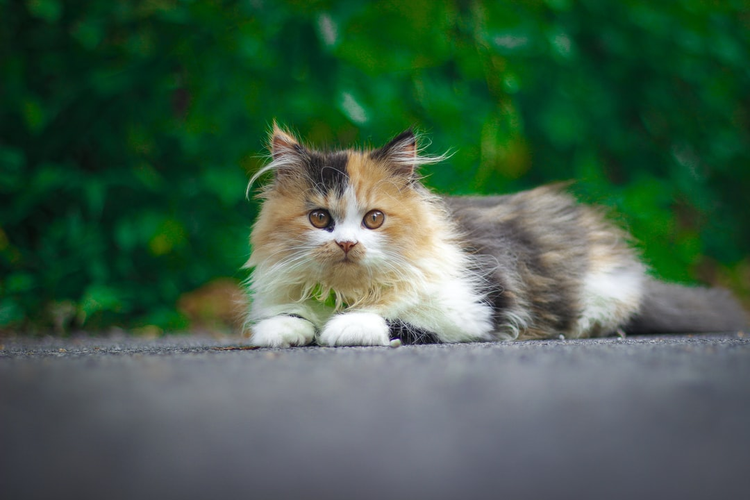 A cat lying on the ground